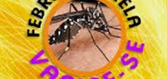 Saiba quem deve se vacinar contra a Febre Amarela
