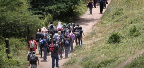 Las migraciones son cada vez más comunes.