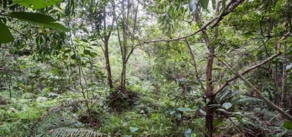 Você consegue encontrar os 12 soldados escondidos nesta floresta? Reprodução: Facebook (The Army in London)