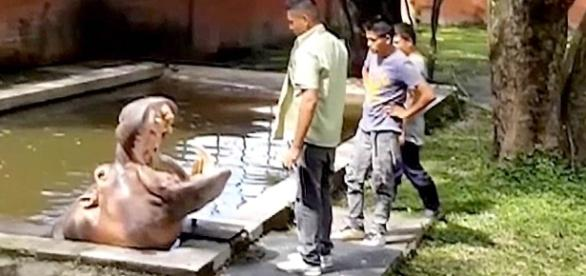 El Salvador Violence: Beloved Hippo 'Gustavito' Killed at Zoo ... - nbcnews.com