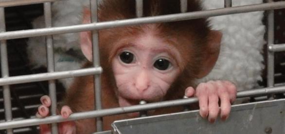 Nach PETA-Kampagne: 'National Institutes of Health' beenden ... - rtl.de
