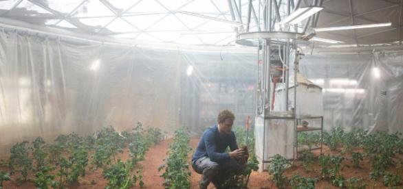 Potatoes Can Grow in Mars-like Soil and Conditions, Study Shows ... - digitaltrends.com