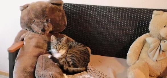 Sogar der Kater muss sich entscheiden, welchen Teddy er bevorzugt