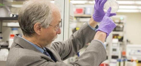 Create artificial yeast - gettysburgian.com/2014/04/first-designer-gene-created-in-living-organism/