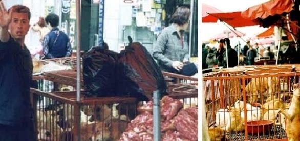 Feira de comercio de carne de cães para consumo humano na Coreia do Sul continuará funcionando.