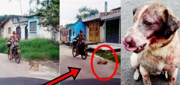 Mulher arrasta cachorro por prazer doentio e povo a coloca na 'carrocinha'