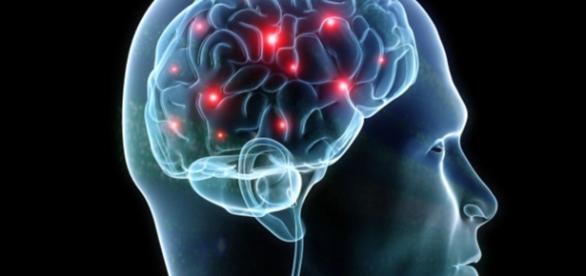 The human brain - CBS News - cbsnews.com