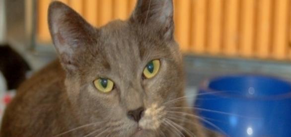 Daily CatScope for Scorpio - wordpress.com