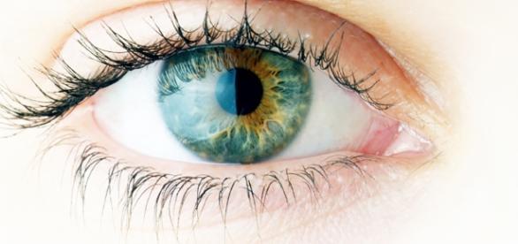 Retinas artificiais são testadas com sucesso