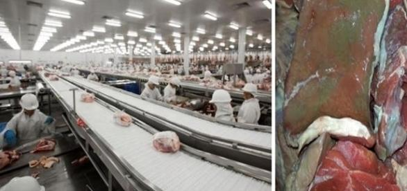 Repasse de carne estragada era feito com aval de fiscais do Ministério da Agricultura.