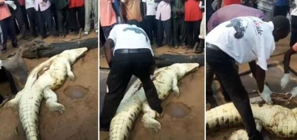 Moradores encontram criança dentro da barriga de crocodilo (Foto: Reprodução/Vídeo)