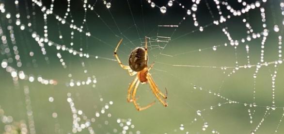 Cientistias descobrem substância produzida por aranha para aliviar derrame cerebral