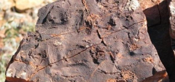 Scientists discover oldest bacteria fossils ... - sciencedaily.com