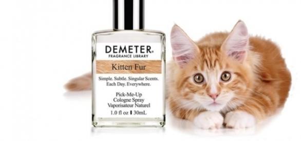 Empresa americana lançou perfume com aroma de pelo de gato