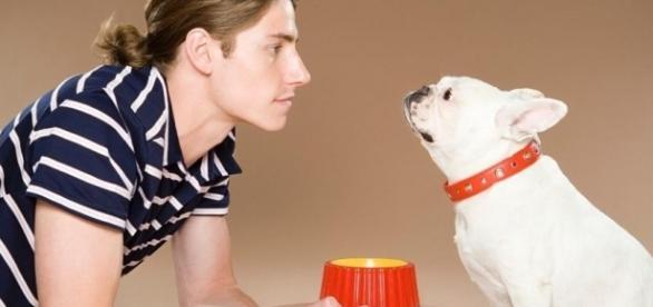 A comunicação dos cães com os donos continua sendo estudada