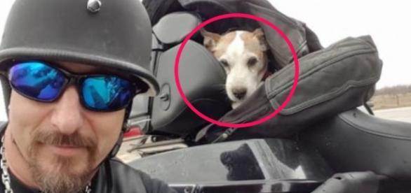 Vio un hombre golpeando cruelmente a un perro en la autopista y lo ... - zoorprendente.com