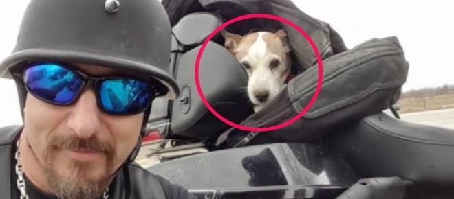 Este motociclista defendió a un perro que estaba siendo golpeado en la autopista
