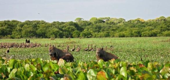 Excursiones por Los Llanos de Venezuela.