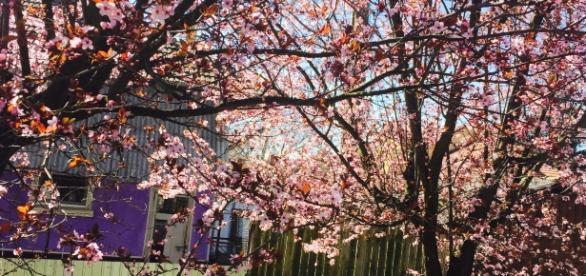 """Renasterea naturii în """"amurg de martie"""""""