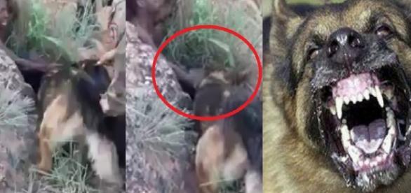 Bandido tenta enganar cachorros da PM