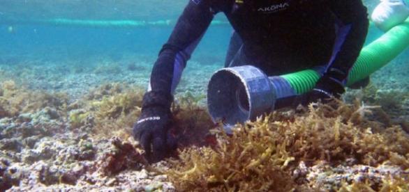 habitat | NOAA's Response and Restoration Blog | Page 9 - wordpress.com