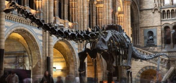 Largest-Ever Dinosaur Footprint Found In 'Australia's Jurassic ... - inquisitr.com