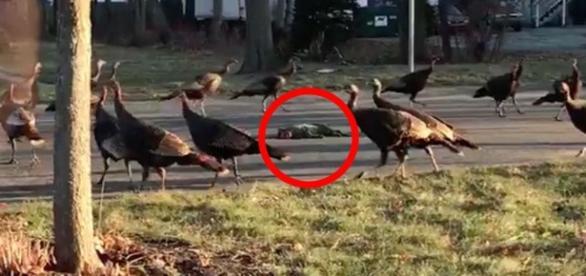 Perus selvagens protagonizaram uma cena que viralizou no Twitter.