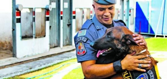 cachorro policial prende 2 assaltantes