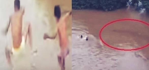 Meninos pulam em rio, mas sucuri gigante aparece; vídeo