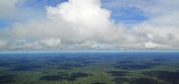 Bioma amazônico - a maior reserva de seres vivos do mundo