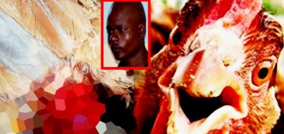 Homem estupra uma galinha - Imagem/Google