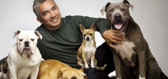 Dog Whisperer Cesar Millan Accused of Animal Cruelty - movieweb.com