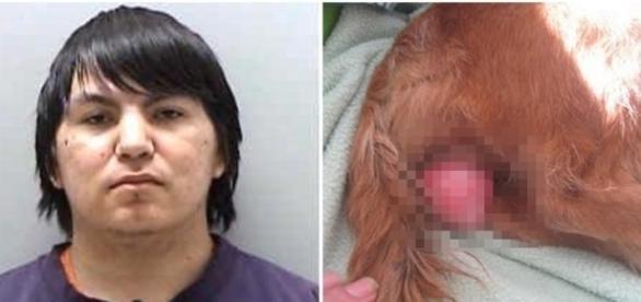 Homem é preso por estuprar um cachorro