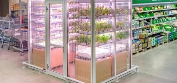 Is Urban Farming Only for Rich Hipsters? - psfk.com