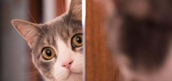 Posso deixar o meu gato sozinho quando viajar?