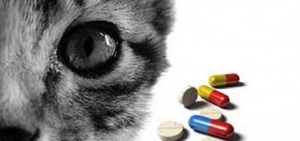Medicamentos prejudiciais para gatos