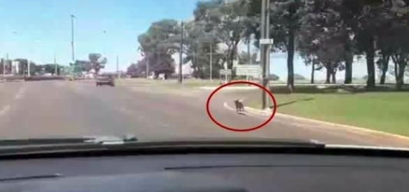 Na imagem o cachorro abandonado correndo atrás do veículo que tinha acabado de deixá-lo.