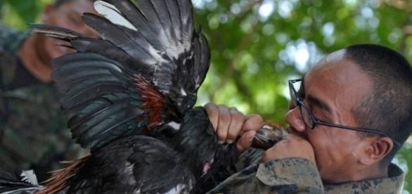Existem treinamentos bizarros adotados pelas forças armadas em várias partes do mundo