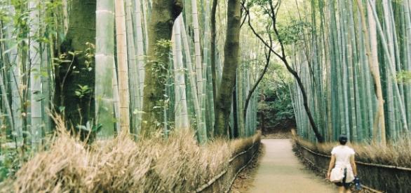 Benessere e Forest bathing, una passeggiata che combatte stress e depressione