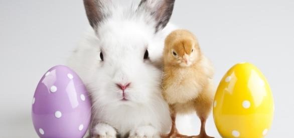Easter Bunny (Sebastian Duda / Adobe Stock)