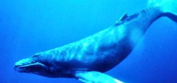Perigo dos desafios do jogo Baleia Azul