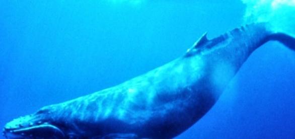 "Jogo mortal se chama ""Baleia Azul"""