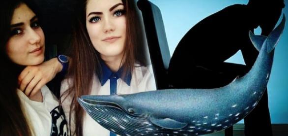 Políticos debatem o 'Baleia Azul' - Imagem/Ilustrativa