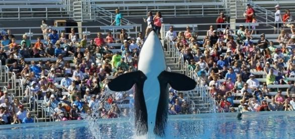 Killer whale dies at SeaWorld San Antonio | Hits 97.3 - hits973.com