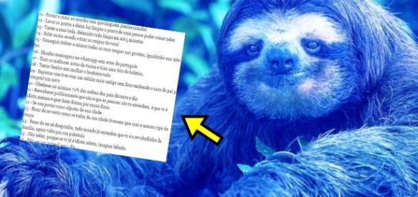 Preguiça Azul surge para concorrer contra 'Baleia' - Imagem/Google