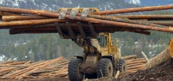 Kady's Watchlist for Oct. 17 – Softwood lumber tops House agenda / Photo by ottawacitizen.com via Blasting News library