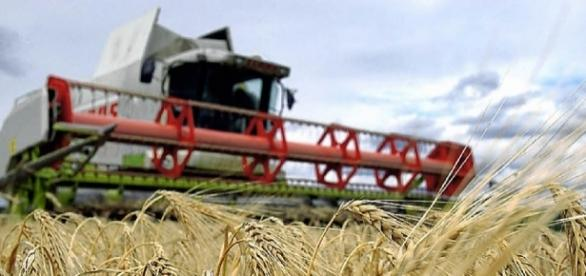 Südwest: Landwirtschaft fühlt sich doppelt bestraft - badische ... - badische-zeitung.de
