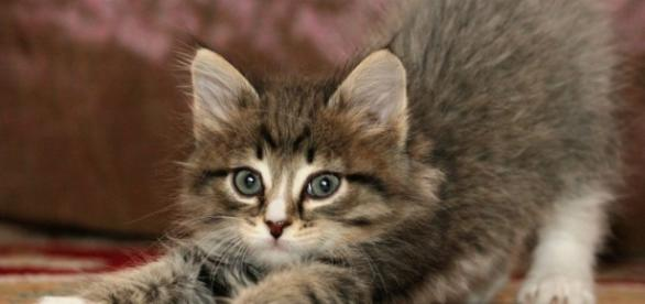 Gatos Archivos - Mundo Cachorro - mundocachorro.com