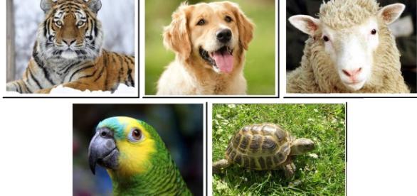 Escolha animais e veja o que você deseja e o que menos deseja no parceiro ideal