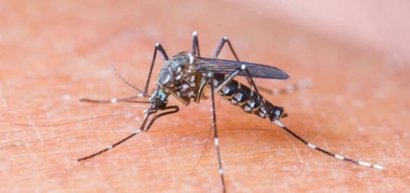 OMS convoca comitê de emergência para tratar do vírus Zika - Mundo ... - com.br